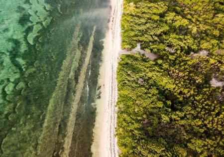 Drone shot of ocean and forested land on the Cayman Islands